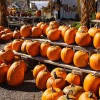 Cider, donuts, corn mazes, fall colors, & Halloween in Manchester
