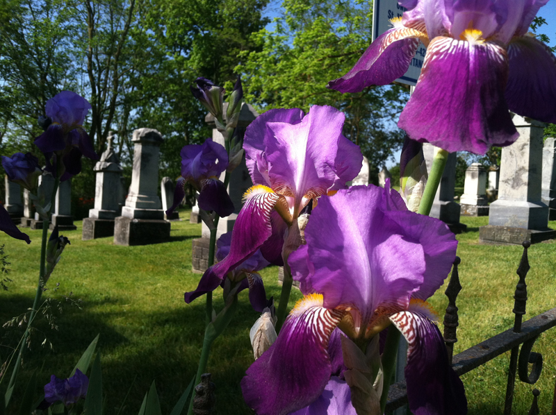 Summer in St. Francis Cemetery in Freedom Township. Photo courtesy of St. Mary, Manchester.